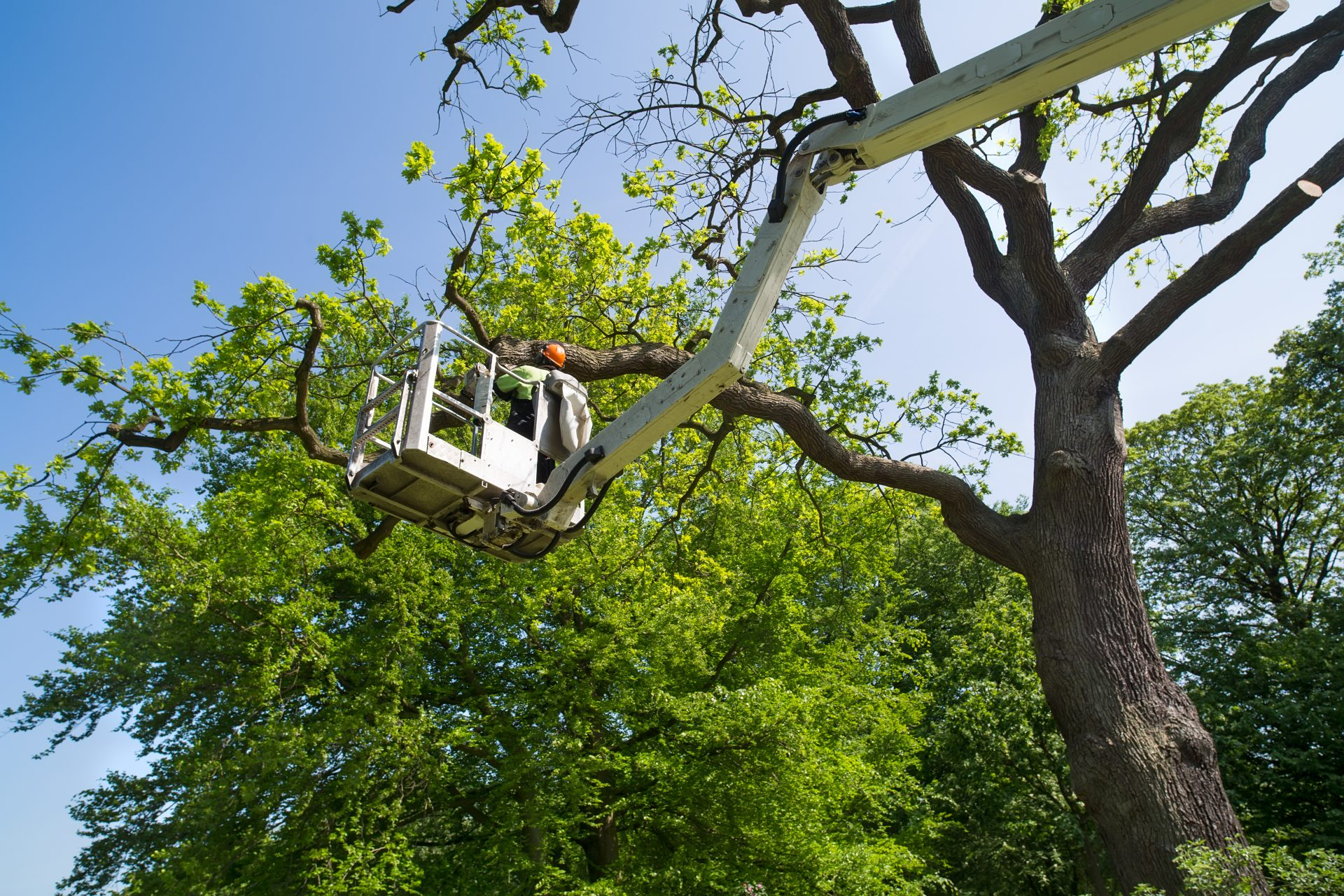 Why Hire an Arborist for Tree Removal