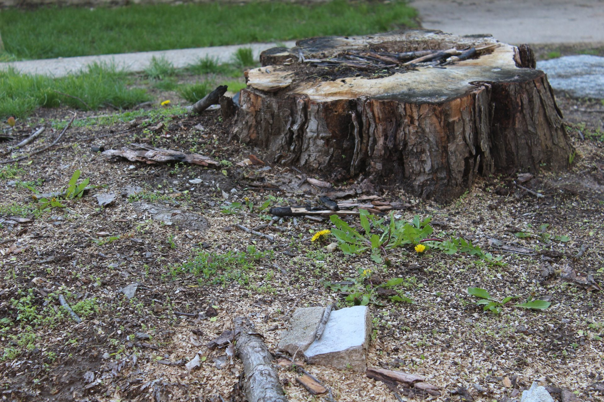 Professional Tree Stump Removal