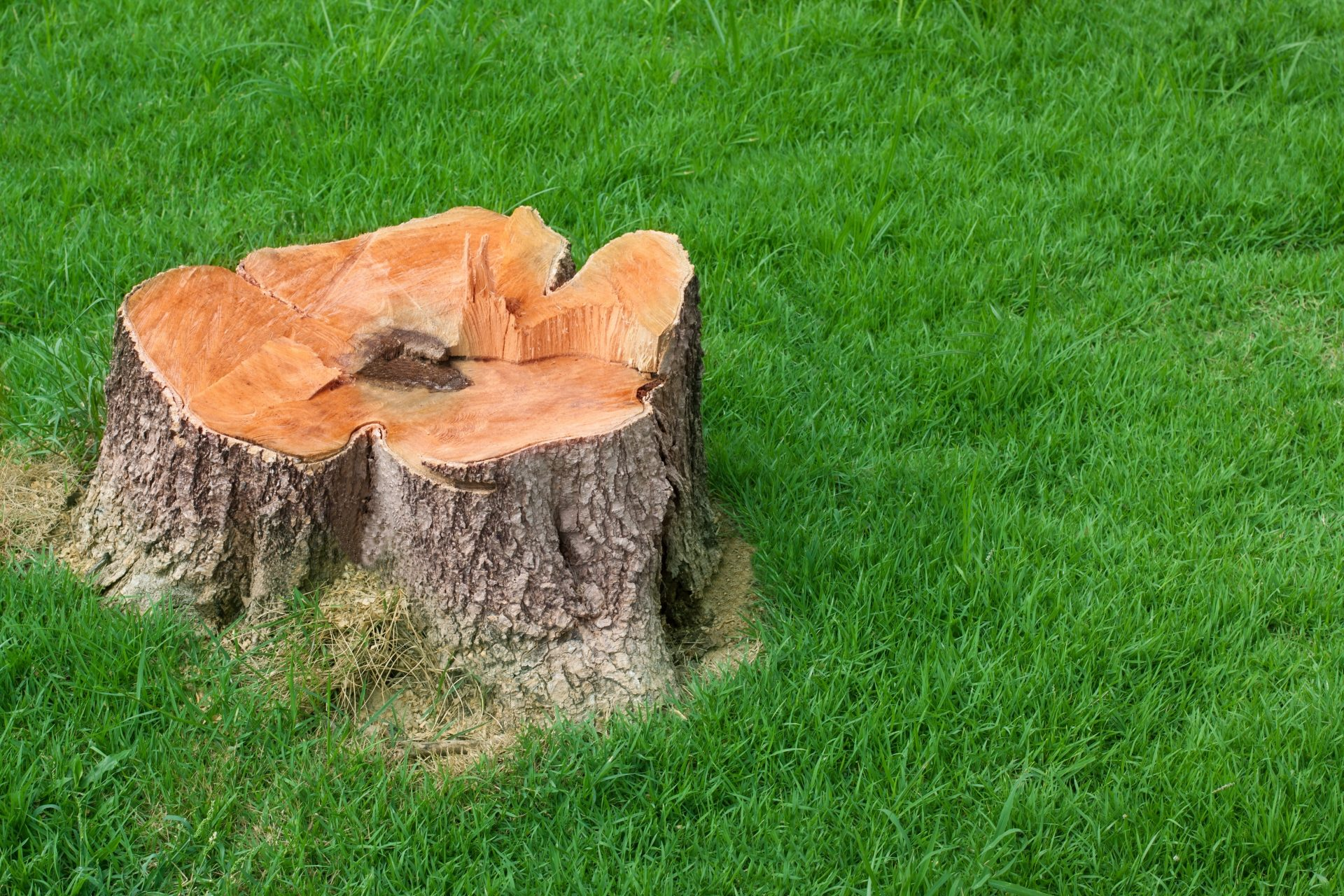 tree stump removal in Towson -- Keil Tree Experts